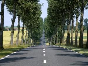 S7-Securite-routiere-vers-la-fin-des-arbres-le-long-des-routes-101951